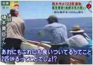 イタチザメと沖縄漁師